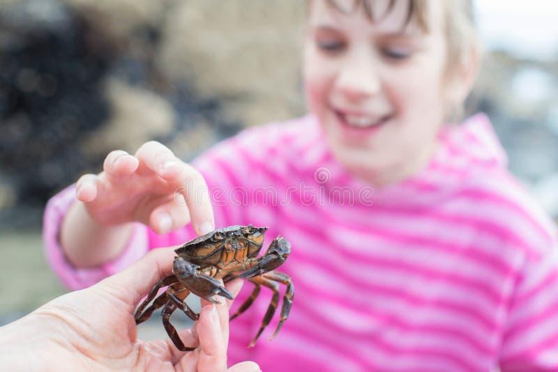 Junges Mädchen-rührende Krabbe gefunden in Rockpool auf Strand stockfotos