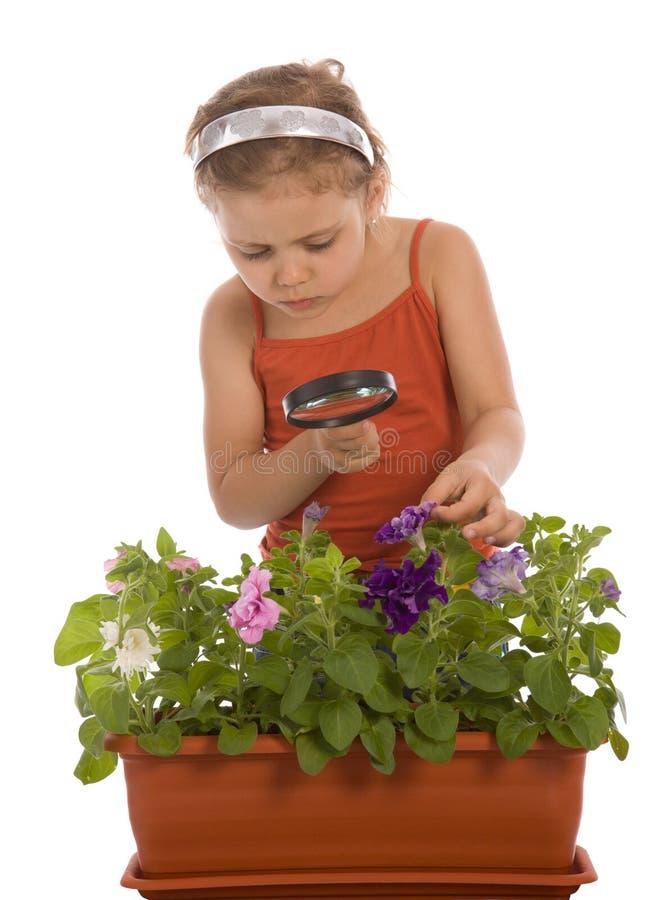 Junges Mädchen schaut durch ein Vergrößerungsglas stockbild