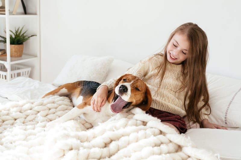 Junges Mädchen spielt mit ihrem Hund auf dem Bett Spürhund und Mädchen lachen zusammen stockfotografie