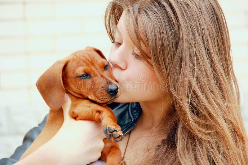 Junges Mädchen umfasst und küsst einen roten Dachshundwelpen auf einem Hintergrund der weißen Backsteinmauer lizenzfreie stockbilder