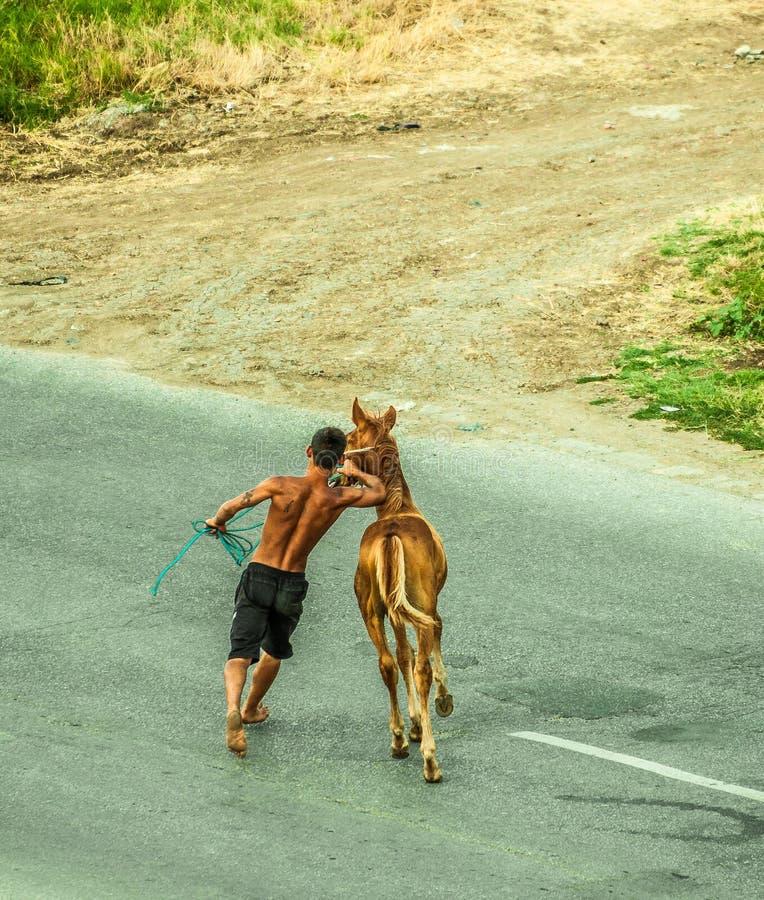Junges Pferd mit seinem Trainer stockfotos
