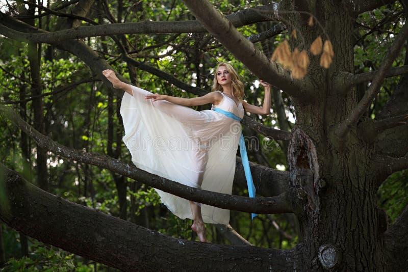 Junges schönes Mädchen, das in der Arabeskenhaltung auf einem großen Baum im Sommerpark steht lizenzfreies stockbild