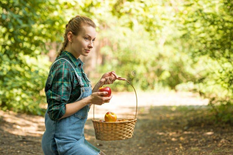 Junges sch?nes Farmm?dchen erntet ?pfel Das Konzept der Sommer- oder Herbsternte mit leerem Raum f?r das Schreiben lizenzfreies stockbild