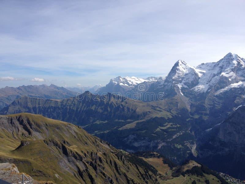 Jungfrau moch, elger I Schweiz arkivfoto
