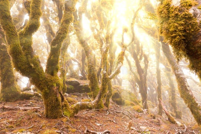 Jungfraugebirgsregenwald von Marlborough, NZ stockfotografie