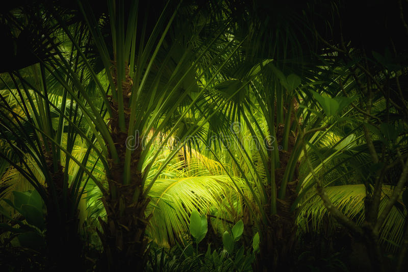Download Jungle Royalty Free Stock Photography - Image: 20058167