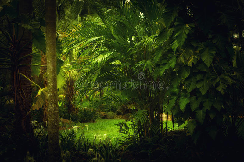 Download Jungle Royalty Free Stock Image - Image: 21297316