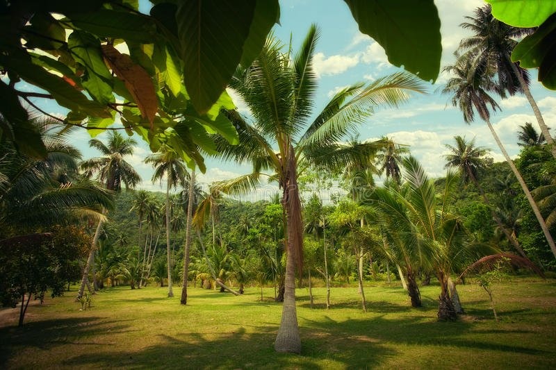 Download Jungle stock image. Image of growth, exotic, idyllic - 24821557