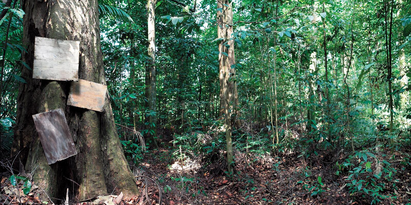 Download Jungle stock image. Image of jungle, greens, trees, part - 28506491