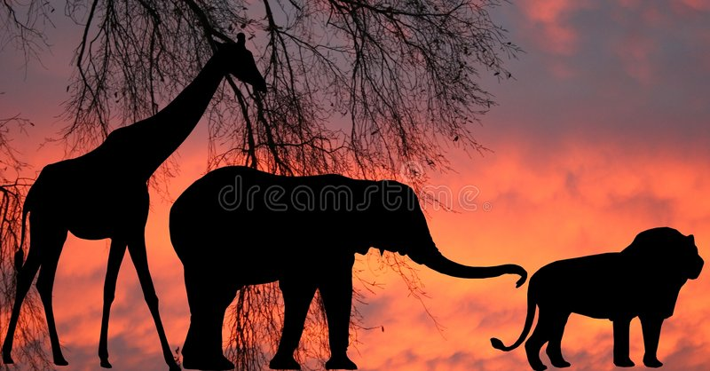 In the Jungle royalty free stock image