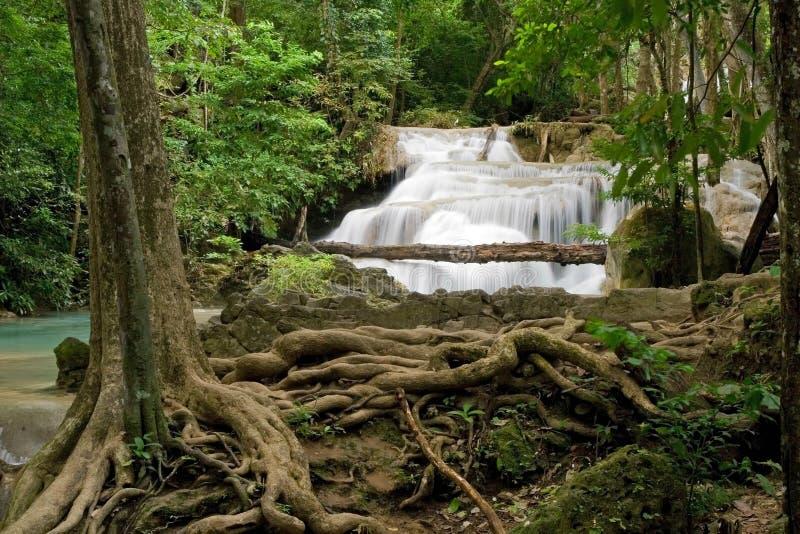 Jungle image libre de droits