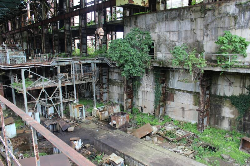 Jungle in an abandoned factory. royalty free stock photos