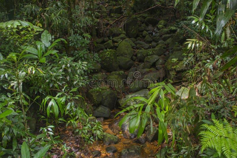 Jungle asiatique du sud-est image libre de droits