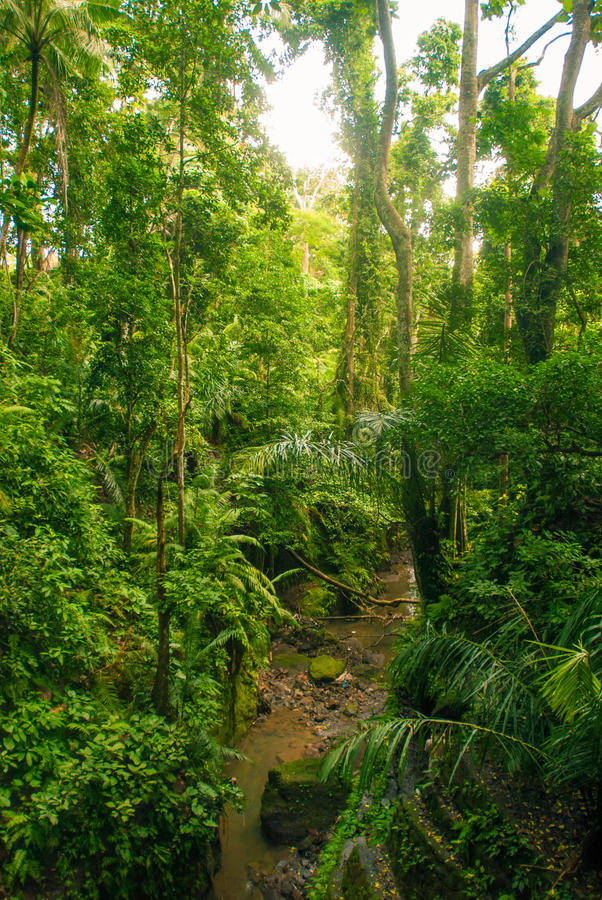 Download Jungle in Bali stock photo. Image of natural, indonesia - 27713986