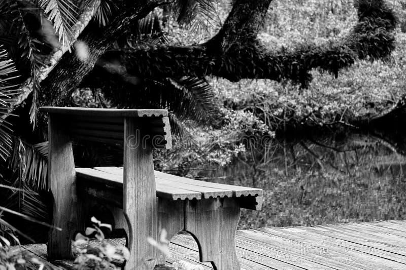 Jungle bench royalty free stock photo