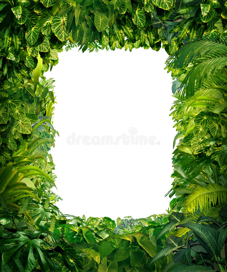 Jungle Border. Blank frame with rich tropical green plants as ferns and palm tree leaves found in southern hot climates as south America Hawaii and Asia with
