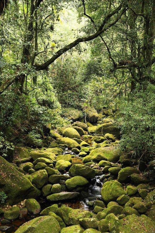 Jungle in Brazil. Brazil - jungle view in Mata Atlantica (Atlantic Rainforest ecosystem) in Serra dos Orgaos National Park (Rio de Janeiro state stock photography
