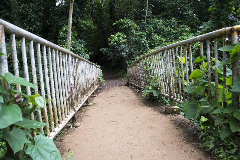 Jungle bridge. royalty free stock photos