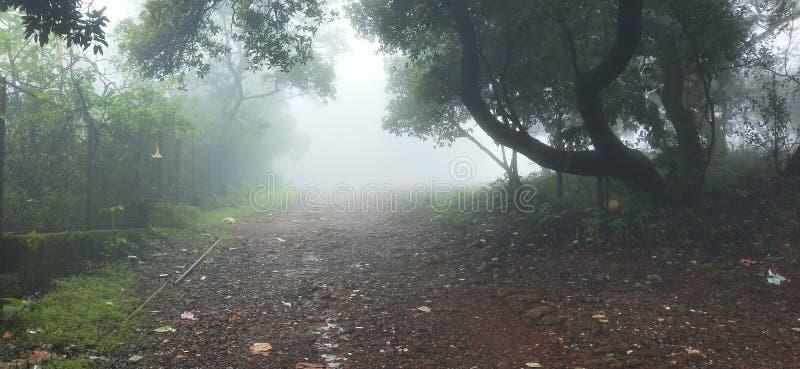 Jungle brumeuse à la route image stock