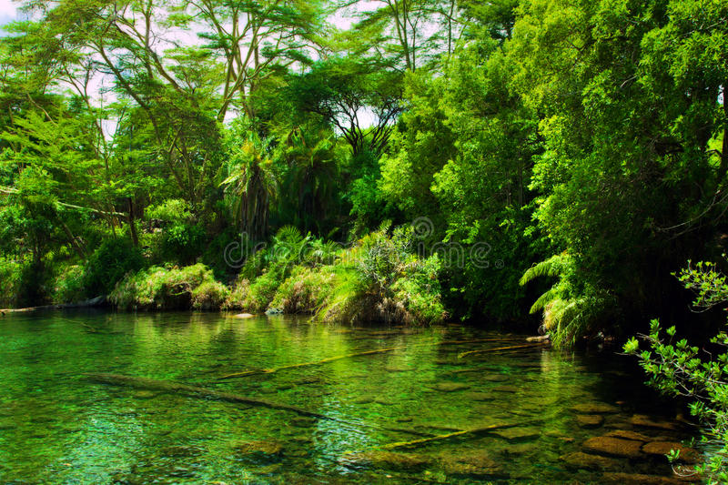 Jungle, bush and water spring in Africa. Tsavo West, Kenya. Jungle, green bush and water spring in Africa. Tsavo West, Kenya stock photography