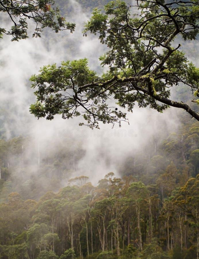 Jungle Canopy stock image