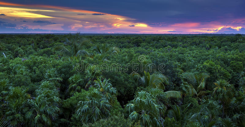 Download Jungle Canopy stock image. Image of paradise, canopy - 28512595