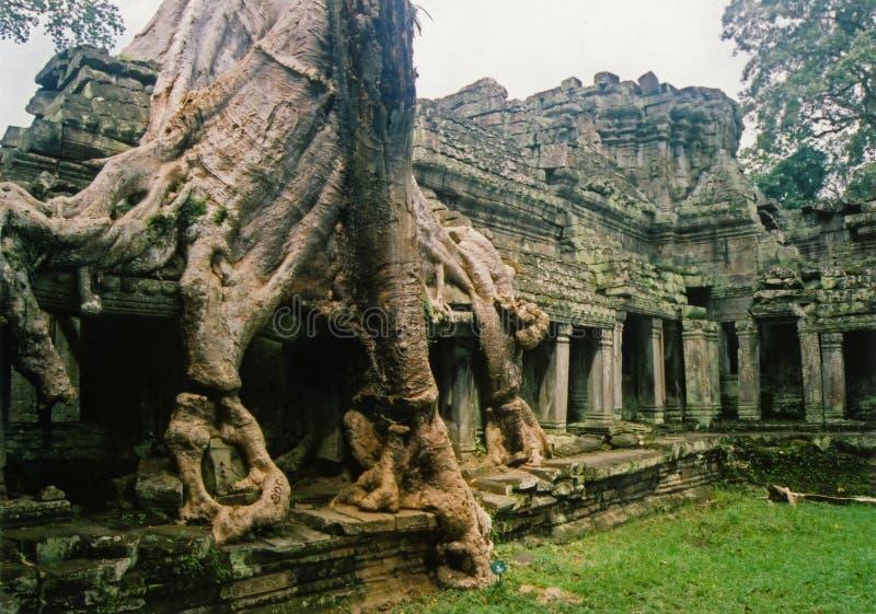 Jungle city angkor wat temple ruins Cambodia royalty free stock images