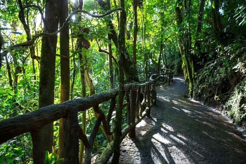 Jungle in Costa Rica stock photos