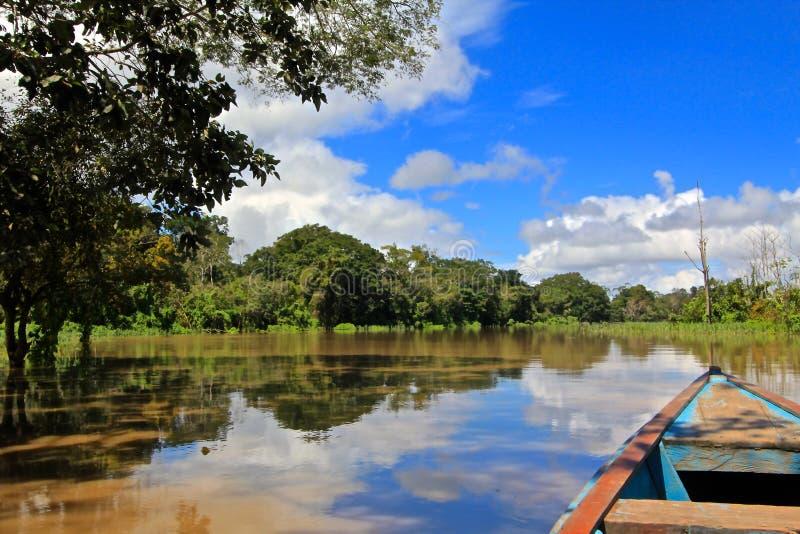 Jungle d'Amazone images libres de droits