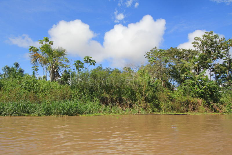 Jungle d'Amazone images stock