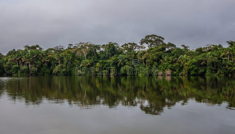 Jungle d'Amazone photos libres de droits