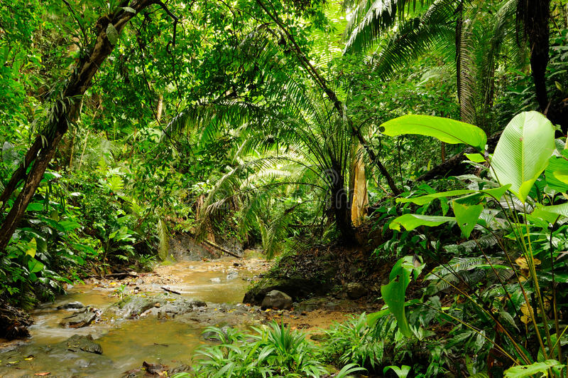 Jungle de Darien photo stock