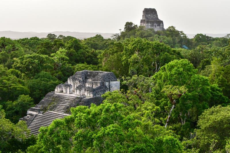 Jungle de Densed au parc national de Tikal, Guatemala photographie stock libre de droits