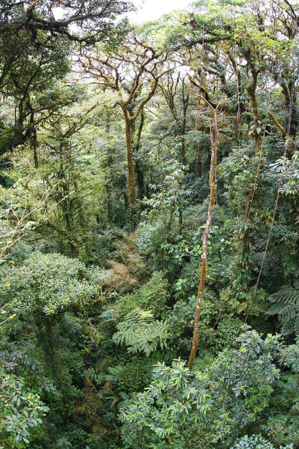 Jungle de Rican de côte photographie stock