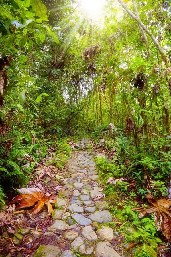jungle de sentier piéton images libres de droits