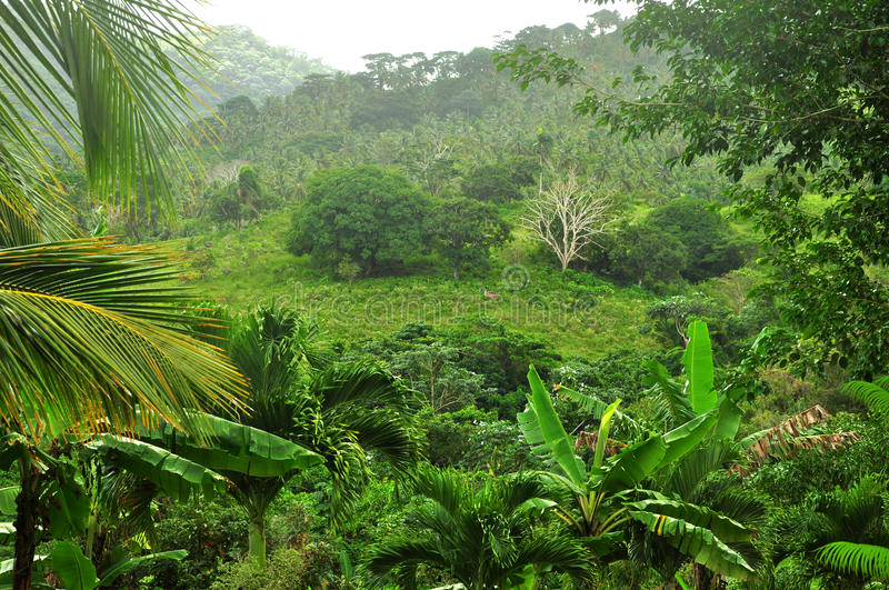 Jungle at Dominican Republic stock photography