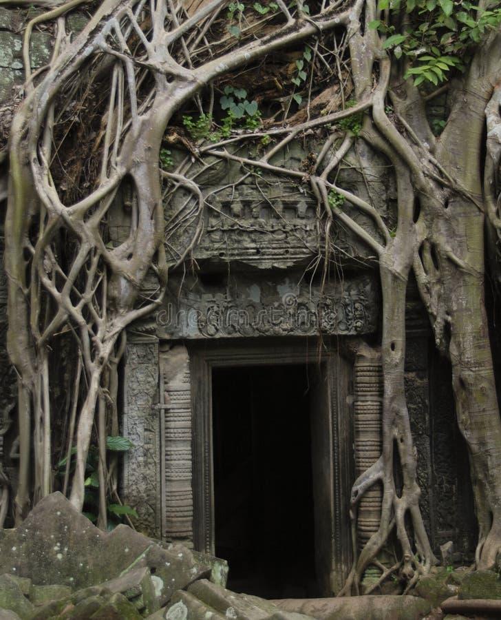 Jungle doorway royalty free stock photos