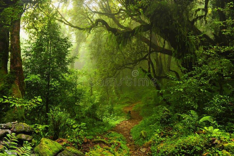 Jungle du Népal photos stock
