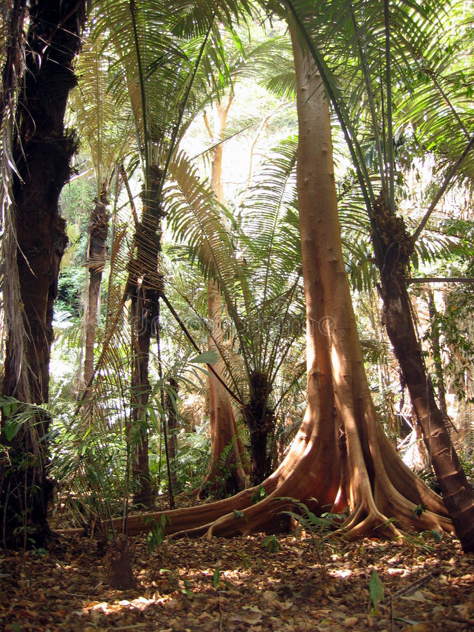 Jungle en Thaïlande image stock