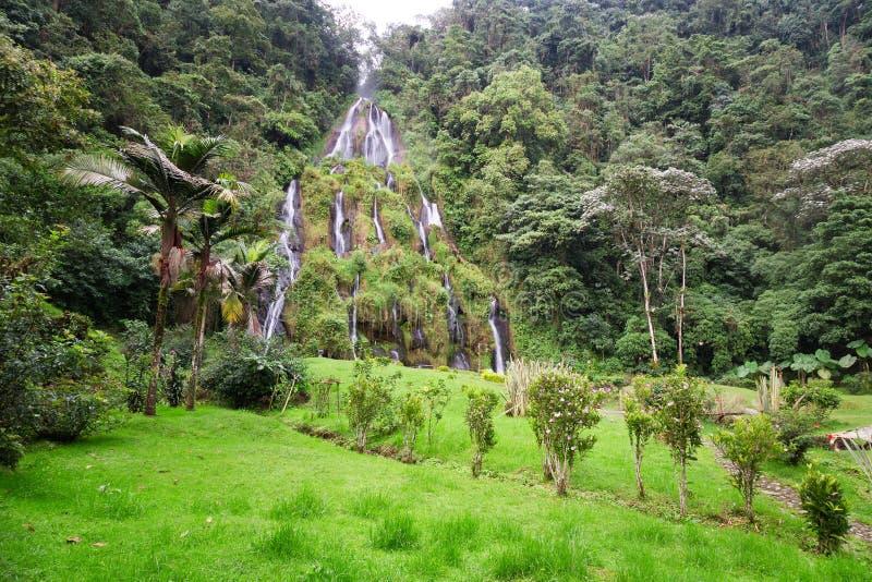 Jungle et cascade à écriture ligne par ligne images stock