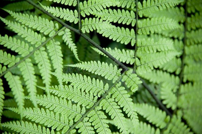 Download Jungle Fern stock photo. Image of foliage, costa, stem - 5596604