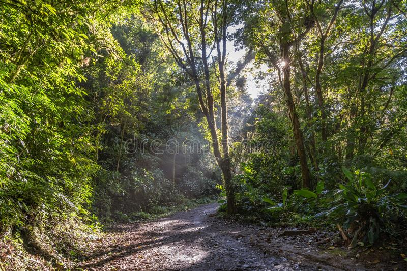 Jungle floor path with sunrays breaking through the trees. In Costa Rica`s Cloud Forest Reserve stock photos