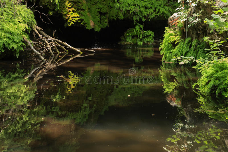 Download Jungle or Forest stock photo. Image of fern, plants, swamp - 27706892