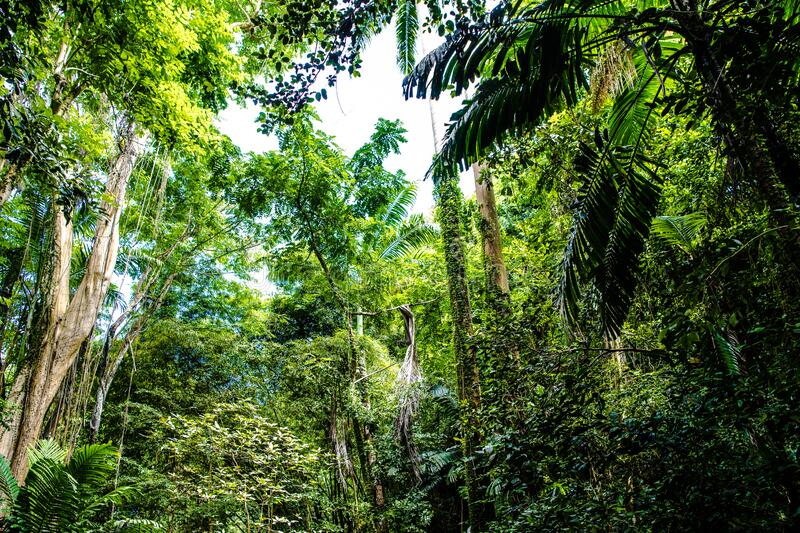 Tropical jungle forest in Barbados royalty free stock image