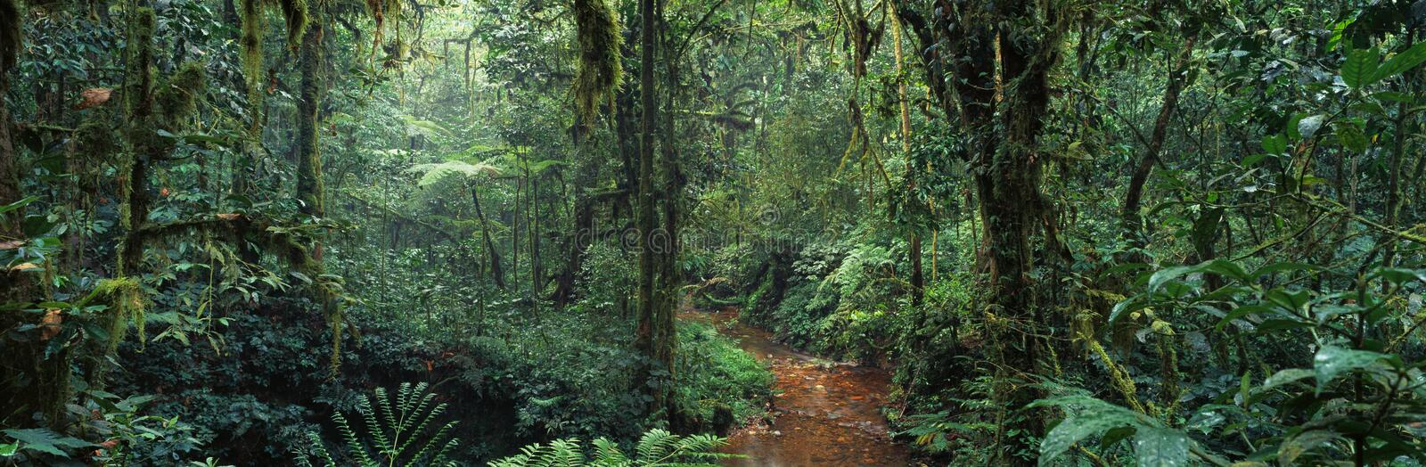 Jungle. Forest tree africa congo panorama landscape rainforest branch grass