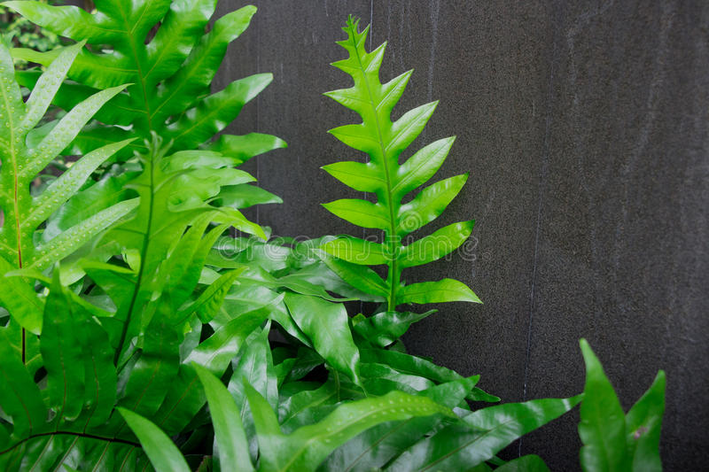Jungle greenery and dangerous plants must be kept at a safe distance, and toxic jungle greenery can give you a rash which needs to. Be cleaned daily. This stock photos
