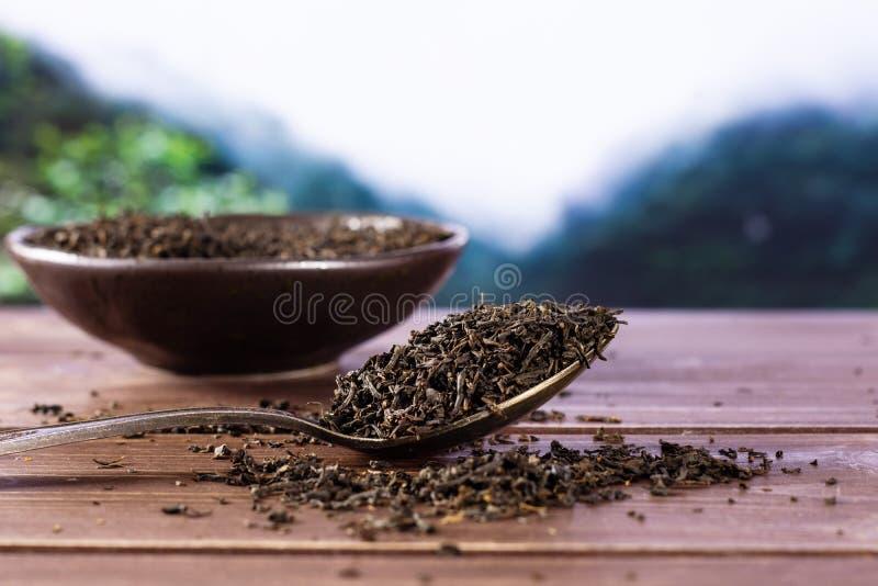 Jungle grise de l'Asie de comte de thé noir photo stock