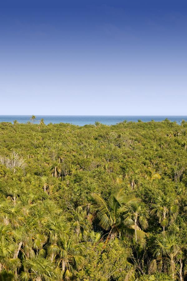 Download Jungle High View Of Mexican Stock Image - Image: 16280981