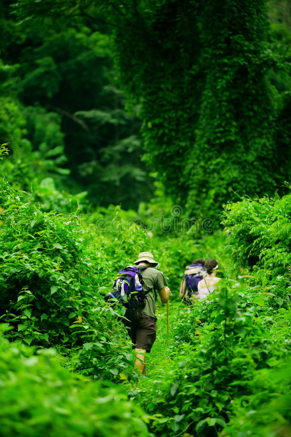 Free Jungle Hike Stock Photography - 3279092