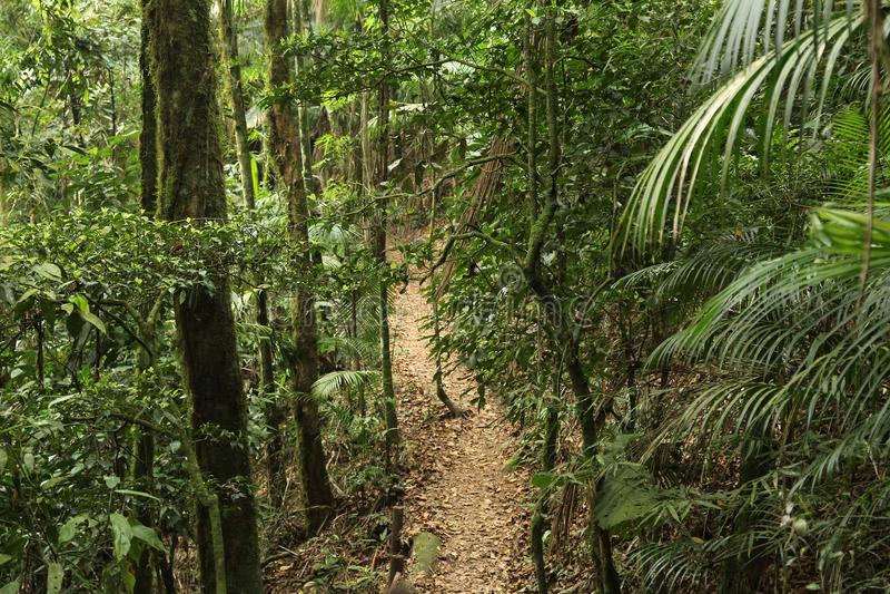Jungle hiking in Brazil. Brazil - jungle hiking trail in Mata Atlantica (Atlantic Rainforest biome) in Serra dos Orgaos National Park (Rio de Janeiro state royalty free stock images